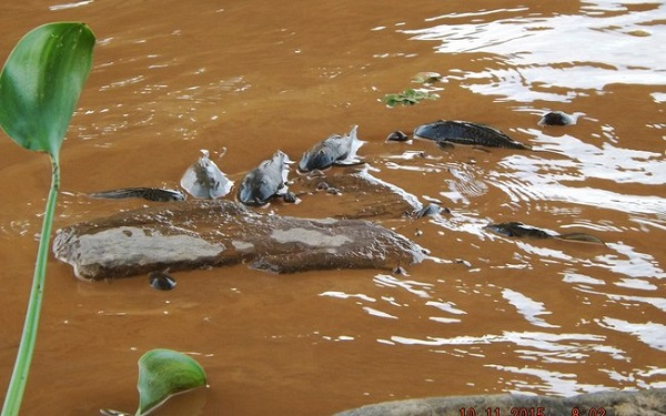 Tragedia Rio Doce