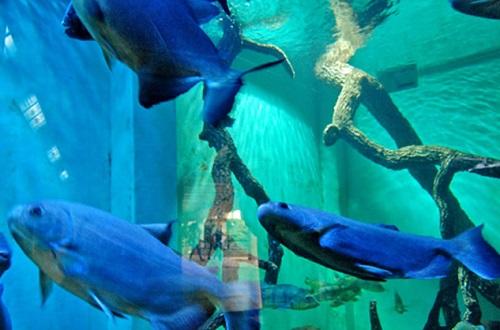 Aquário Zoo BH