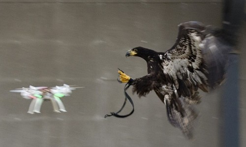 Drone x Águia